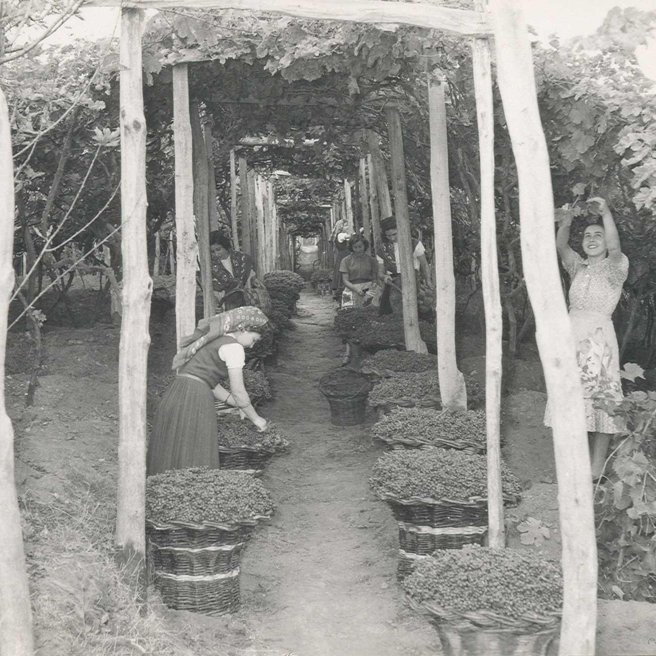 H&H Boal Madeira 1957